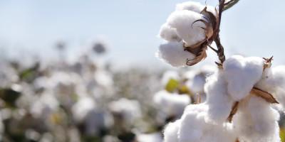 Baumwoll preis auf niedrigem Stand