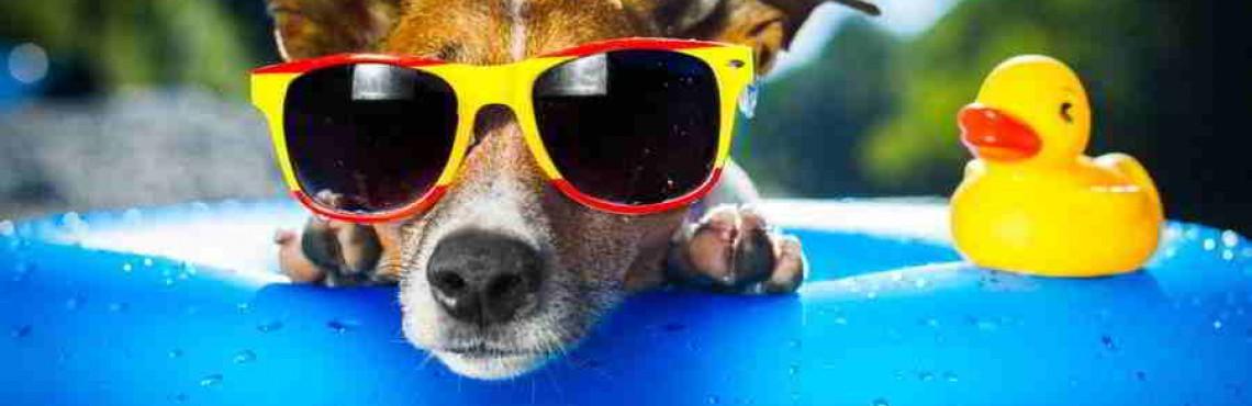Hundepension eröffnen